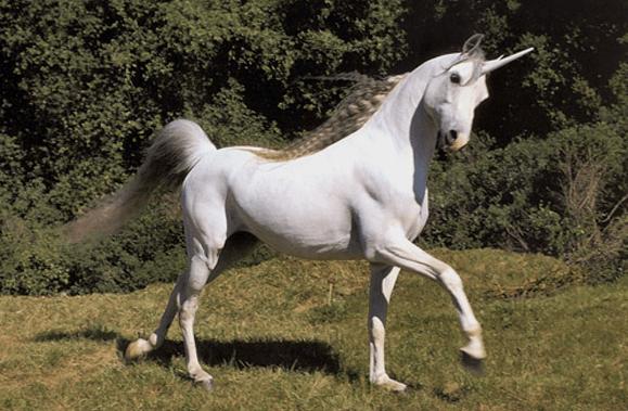 http://www.flock-associates.com/wp-content/uploads/2013/04/Unicorn.png