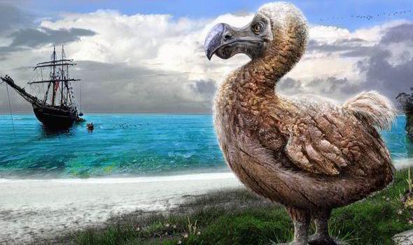 dodo-endangered-species-day-577641